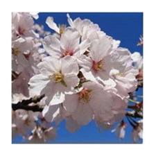 White Cherry Blossoms Tile Coaster