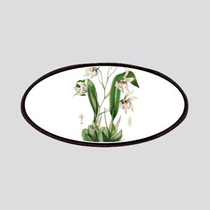 L'Illustration Horticole odoutoglossum Patch