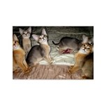 Cute Aby Kittens Magnets