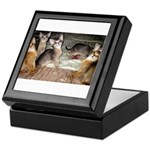 Cute Aby Kittens Keepsake Box