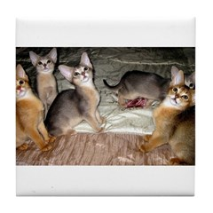 Cute Aby Kittens Tile Coaster