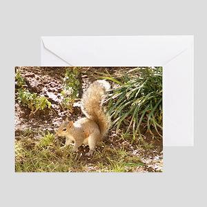 Squirrel Playing Greeting Card
