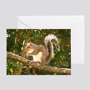 Squirrel Eating on Branch Greeting Card