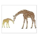 Giraffe Mom and Baby Posters
