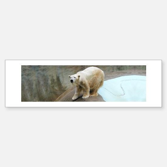 Helaine's Polar Bear Sticker (Bumper)