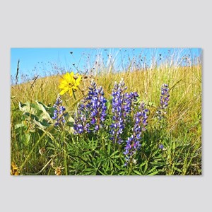 Lupine on Mt. Sentinel Postcards (Package of 8)