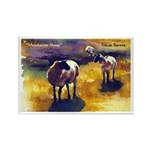 Mendocino Sheep