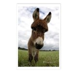 Humorous Equine Postcards (Package of 8)