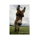 Humorous Equine Rectangle Magnet (10 pack)