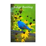 Indigo Bunting Mini Poster Print