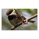 Chickadee Rectangle Sticker 10 pk)
