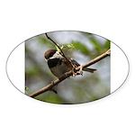 Chickadee Oval Sticker (50 pk)