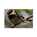 Chickadee Rectangle Magnet (100 pack)