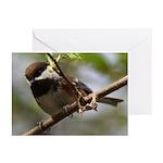 Chickadee Greeting Cards (Pk of 20)