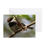 Chickadee Greeting Cards (Pk of 10)