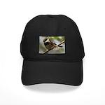 Chickadee Black Cap