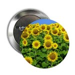 "Sunflower Cluster 2.25"" Button (10 pack)"