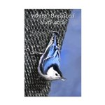 Nuthatch Mini Poster Print