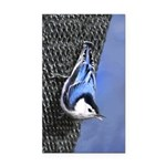 Nuthatch Rectangle Car Magnet