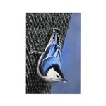 Nuthatch Rectangle Magnet
