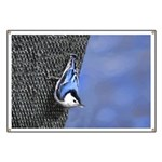 Nuthatch Banner