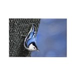 Nuthatch Rectangle Magnet (100 pack)