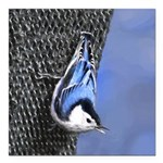 Nuthatch Square Car Magnet 3