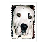 ...Dalmatian 16... Postcards (Package of 8)