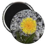 """Dandelion 2.25"""" Magnet (100 pack)"""