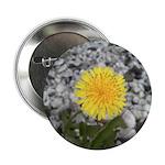 """Dandelion 2.25"""" Button (100 pack)"""