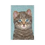 Gray Tabby Cat Rectangle Magnet (100 pack)