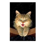 Mad Yellow Tabby Cat Postcards (Package of 8)