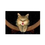 Mad Yellow Tabby Cat Rectangle Magnet (100 pack)