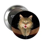 Mad Yellow Tabby Cat 2.25