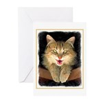 Mad Yellow Tabby Cat Greeting Cards (Pk of 10)