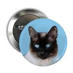 Siamese Cat 2.25