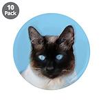 Siamese Cat 3.5