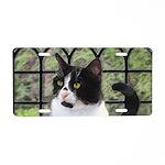 Tuxedo Cat in Window Aluminum License Plate