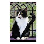 Tuxedo Cat in Window Postcards (Package of 8)