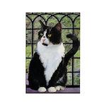Tuxedo Cat in Window Rectangle Magnet (10 pack)