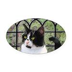 Tuxedo Cat in Window Oval Car Magnet