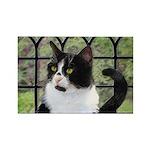 Tuxedo Cat in Window Rectangle Magnet
