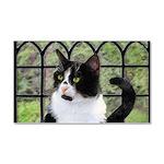 Tuxedo Cat in Window Car Magnet 20 x 12