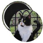 Tuxedo Cat in Window Magnet