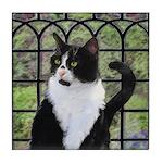 Tuxedo Cat in Window Tile Coaster