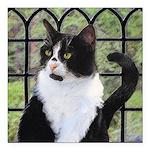Tuxedo Cat in Window Square Car Magnet 3