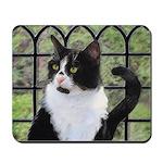 Tuxedo Cat in Window Mousepad