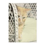 Yellow Tabby Cat 5'x7'Area Rug