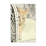 Yellow Tabby Cat Mini Poster Print