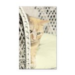 Yellow Tabby Cat Rectangle Car Magnet